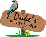 Duke's Forest Lodge